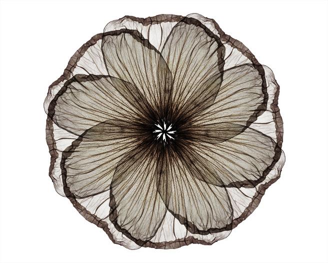 Petal Wheel