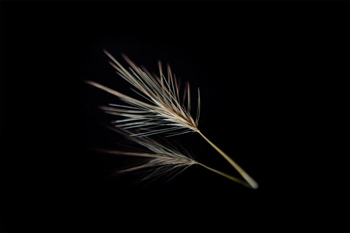 Wild Grain